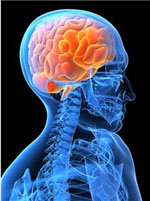 Weight Loss, Paleo Diet, and Your Brain